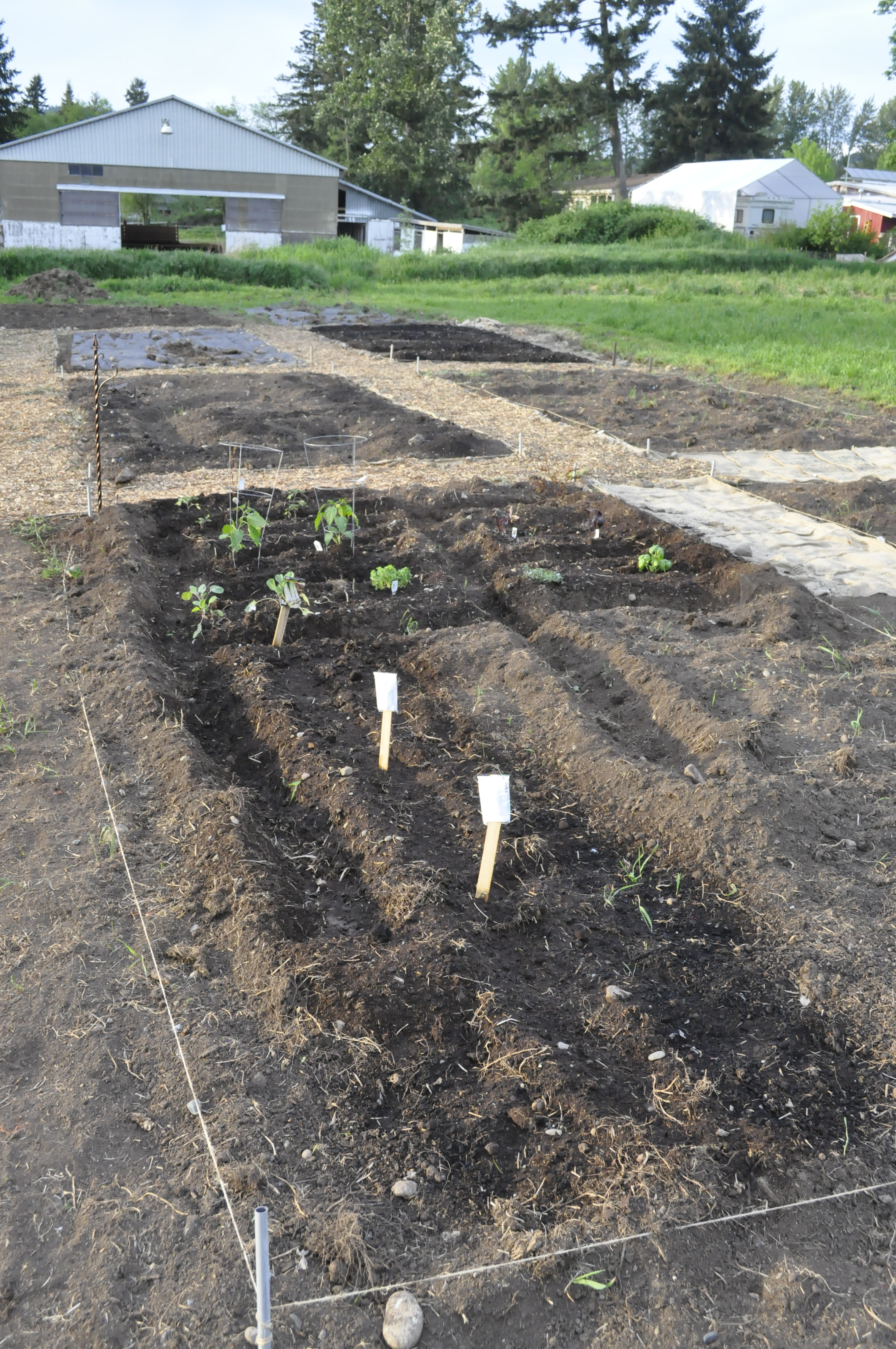 Community Gardens – Sustainable Renton